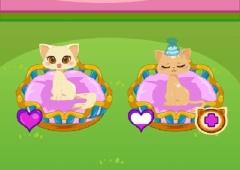 Cuide dos Gatinhos