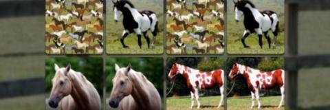 Jogo de Memória de Cavalos